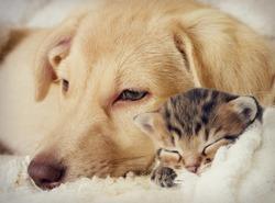 Puppy and kitten are sleeping