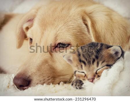 Shutterstock Puppy and kitten are sleeping
