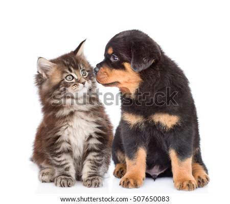 Shutterstock Puppy and kitten looking at each other. isolated on white background