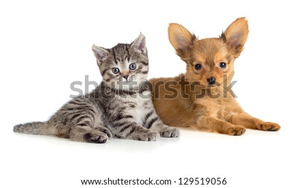 Puppy and kitten lying together. Cat and dog.