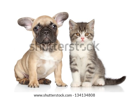 Puppy and Kitten on a white background