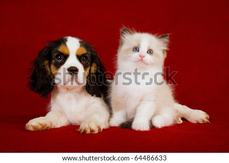 Puppy and kitten on red background