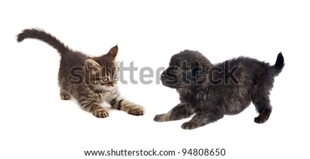 Puppy and kitten playing isolated on white background