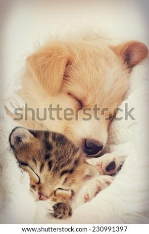 Puppy and kitten sleeps