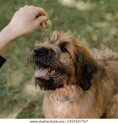 Puppy briard and his owner on the meadow #1459107767