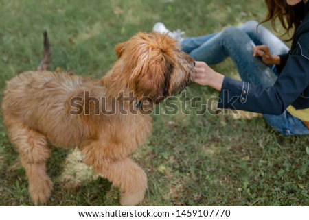 Puppy briard and his owner on the meadow #1459107770
