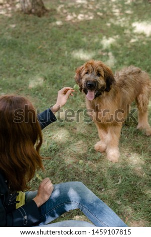 Puppy briard and his owner on the meadow #1459107815