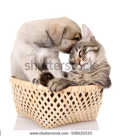 puppy caresses a kitten. isolated on white background