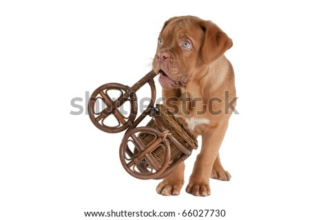 Puppy carrying a handcrafted bicycle
