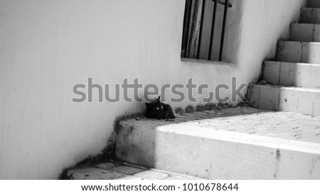 Puppy cat lying in shadow in stairs. Pic in black and white