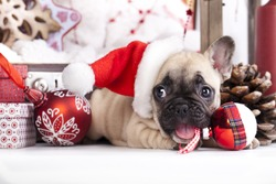 puppy christmas French Bulldog