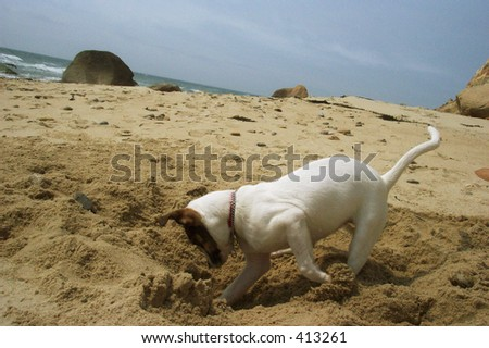 Puppy Digging in sand on Beach