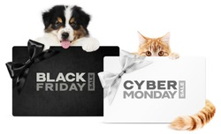 puppy dog and cat pets together showing  black and silver gift card with black friday and cyber monday text isolated on white background blank template and copy space