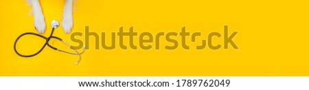 Puppy dog border collie paws and stethoscope isolated on yellow background. Little dog on reception at veterinary doctor in vet clinic. Pet health care and animals concept. Banner Foto stock ©