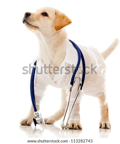 Puppy dog dressed as a vet - isolated over a white background