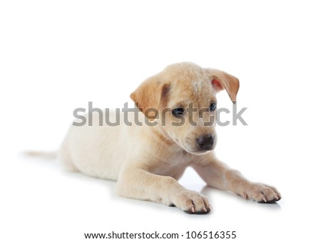 puppy dog isolated on white