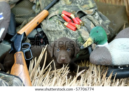 Puppy Dog ready for Hunting