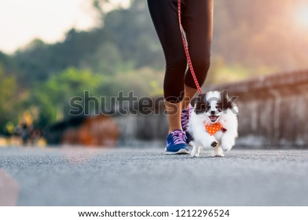 puppy dog running exercise on the road park with girl owner together, training jog together morning