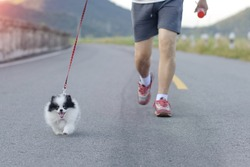 puppy dog running with man exercise on the street park
