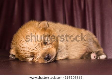 Puppy Dog Sleep