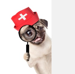puppy dressed like a doctor looks through a magnifying lens. Isolated on white background