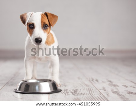Photo of  Puppy eating foot. Dog eats food from bowl