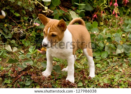 puppy emerging from bushes and standing to survey the scene