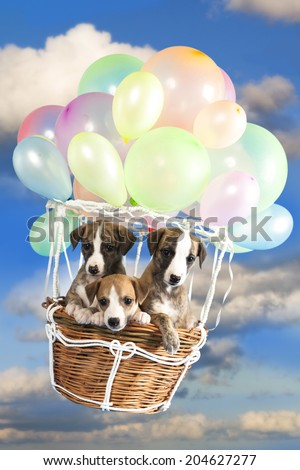 puppy fly in a balloon