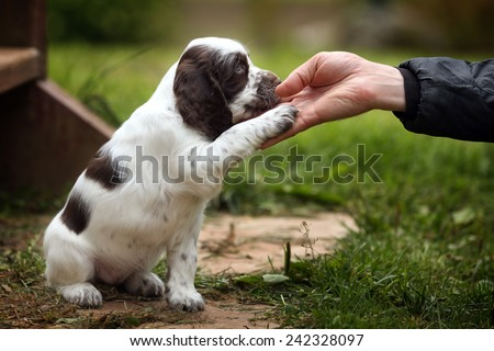 Puppy gives paw