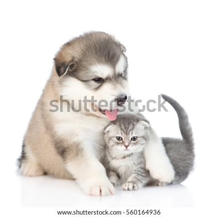 Puppy hugging a kitten.  isolated on white background