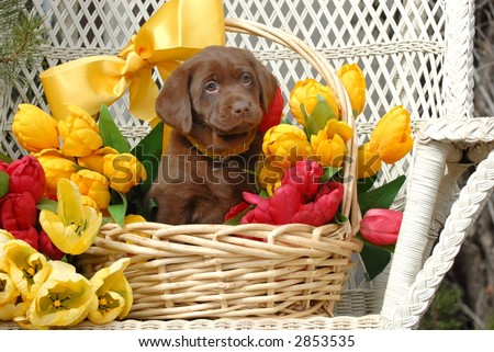 Puppy in a Basket of Flowers