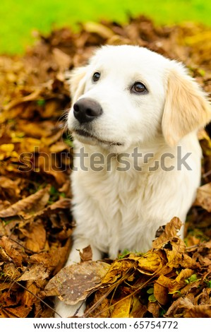 Puppy in leafs