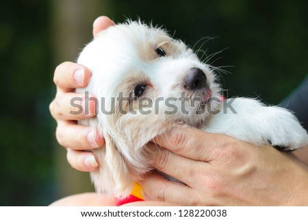 Puppy in love hand.