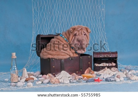 Puppy in Pirates Treasures Trunk in nautical settings