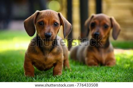 puppy in the garden #776433508