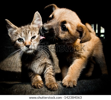 Shutterstock Puppy kitty lick kiss and love