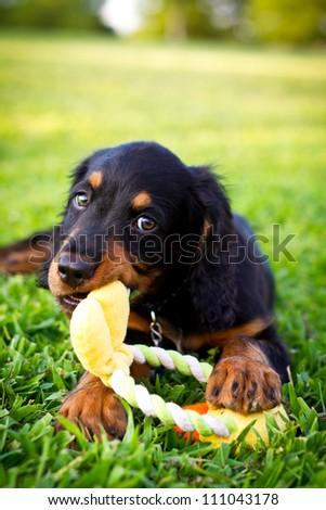 Puppy laying in the grass chewing on a dog toy