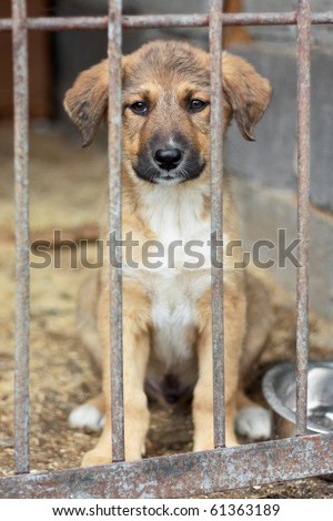 Puppy locked in the cage