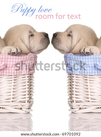 Puppy love sleeping puppies in pink and blue baskets.