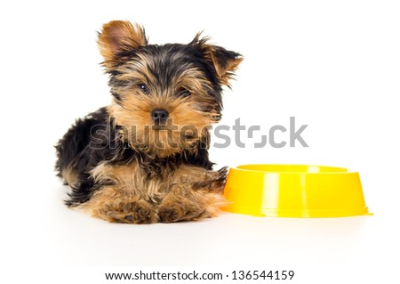 puppy lying near the bowls with food