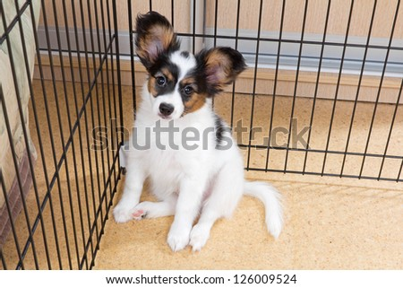 Puppy papillon in a cage for small dogs