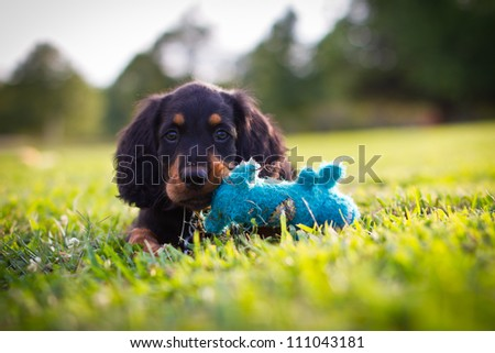 Puppy playing with a blue squeak toy