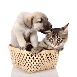 puppy plays with a kitten. isolated on white background