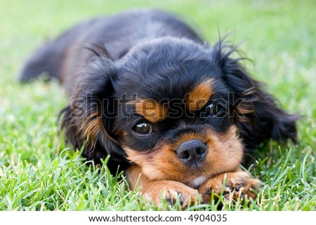 Puppy resting in the grass