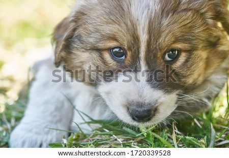 Photo of  Puppy resting in the green grass. Close up photo.