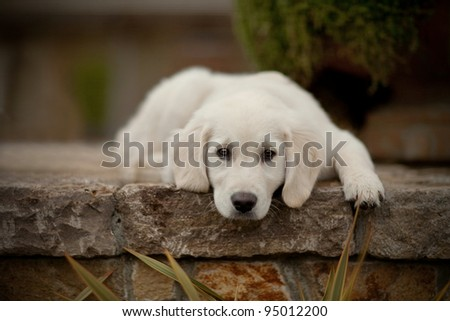 Puppy Sadness - stock photo