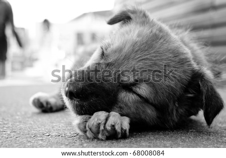puppy sleeping on the street.