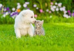 Puppy sniffing kitten on green grass