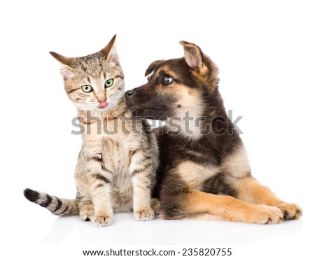 Puppy sniffs cat. isolated on white background #235820755