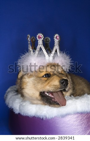 Puppy wearing crown lying in bed.